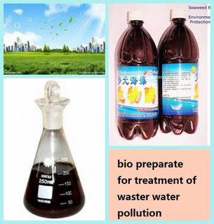 海草Bio Agent為Waste Water Pollution的Treatment