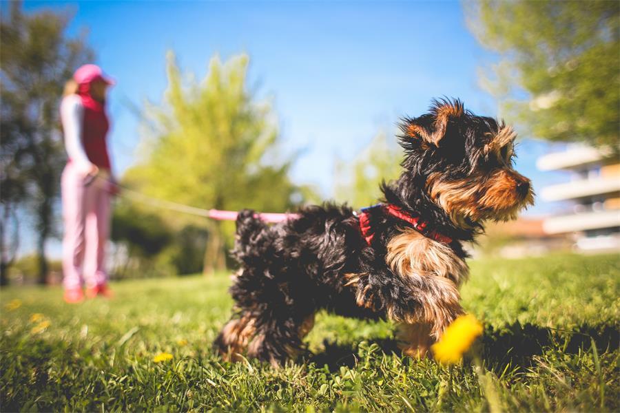 百强橡塑·包胶织带, 塑胶织带, 涂胶织带, 过胶织带, 织带包胶-应用到宠物项圈,牵引绳.jpg